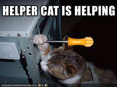 funny pictures of cats with captions